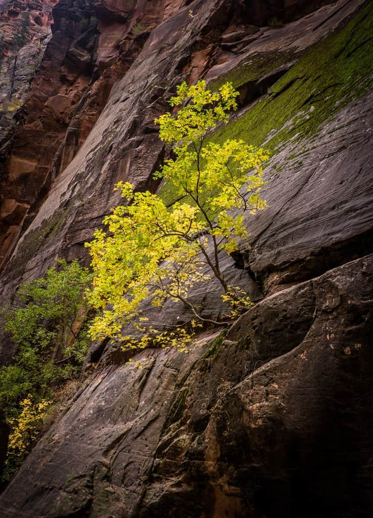 Tree in the Narrows