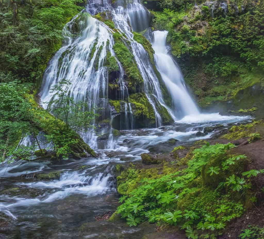 Panther Creek Falls #3